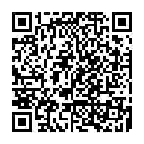 2ページ 技術動画(アルカリカラー)